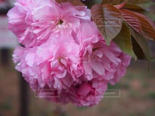 春 - No.403906