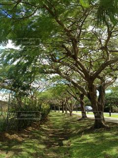 公園の大きな木の写真・画像素材[1169637]