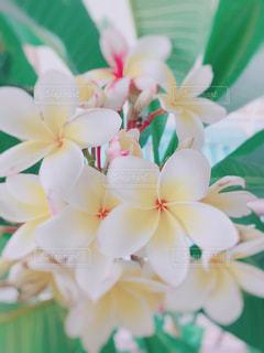 近くの花のアップの写真・画像素材[1416322]