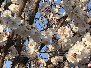 花の写真・画像素材[416382]