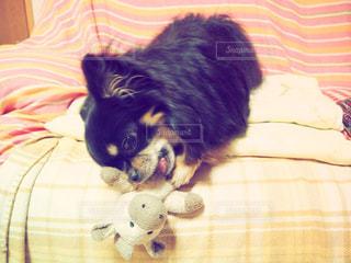 犬の写真・画像素材[378159]