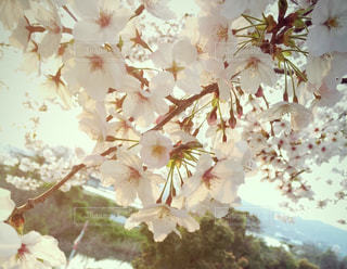 自然の写真・画像素材[402511]