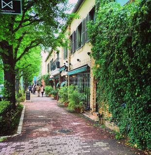 自然,風景,街並み,東京,緑,景色,道,白金台,プラチナ通り