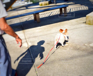 犬の写真・画像素材[444490]