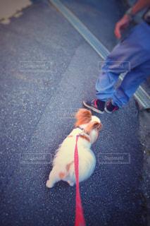 犬の写真・画像素材[444492]