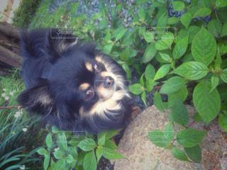 犬の写真・画像素材[455945]