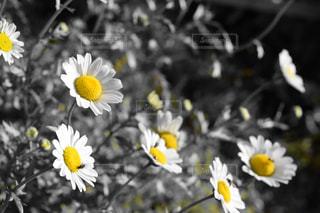 花の写真・画像素材[925319]