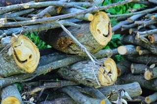 木,笑顔,顔,ポジティブ,可能性
