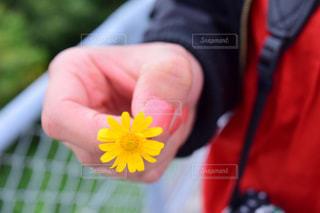 花,春,植物,黄色,手,鮮やか,イエロー,色,黄,yellow