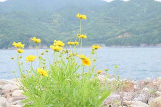 自然,花,植物,黄色,鮮やか,イエロー,色,黄,yellow