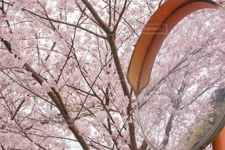 No.423197 春