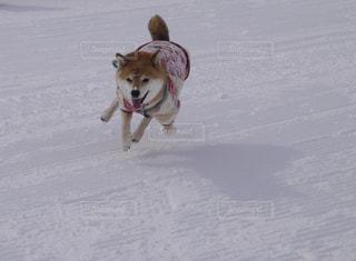 犬 - No.358771