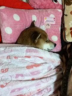 犬の写真・画像素材[472729]