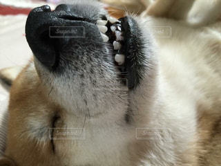 犬の写真・画像素材[472730]