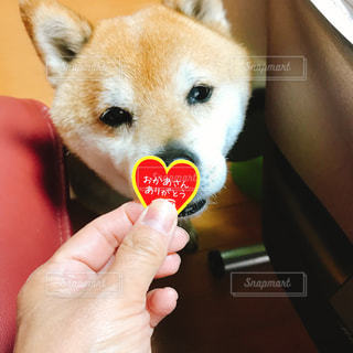 犬の写真・画像素材[480197]