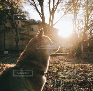 庭に座っている犬の写真・画像素材[849277]