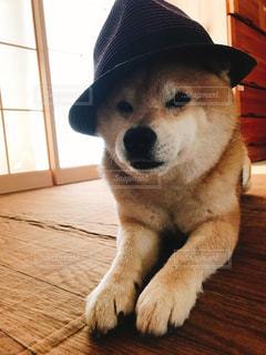 木製の表面の上に座って犬の写真・画像素材[1186616]