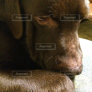 No.472658 犬