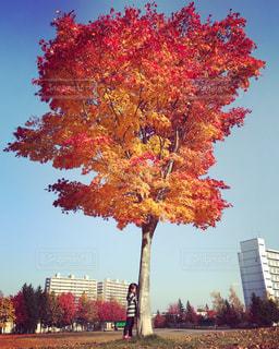 木にピンクの花のグループの写真・画像素材[842768]