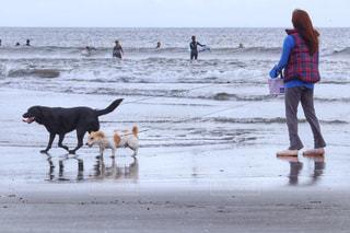 犬の写真・画像素材[455338]