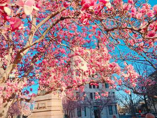春の写真・画像素材[367171]