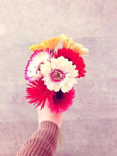 花の写真・画像素材[2026326]