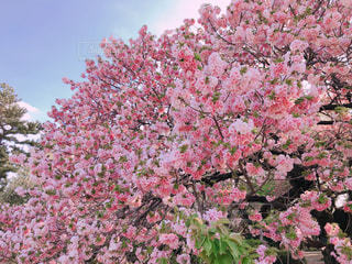 花の写真・画像素材[2058546]