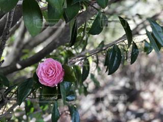 花の写真・画像素材[2058572]