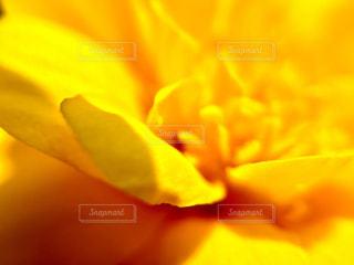 花の写真・画像素材[617749]