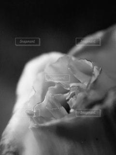 モノクロの花。 - No.816196