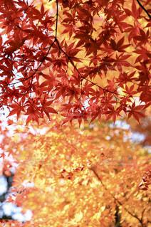 近くの木のアップの写真・画像素材[889962]