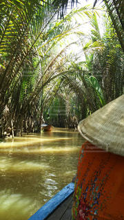 風景,水面,景色,木漏れ日,ベトナム,リバークルーズ