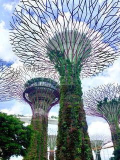 風景,海外,景色,シンガポール,海外旅行,植物園