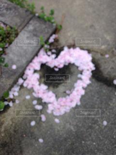 花,春,ピンク,ハート,地面,さくら