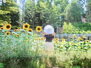 庭園の人々 のグループの写真・画像素材[1273512]