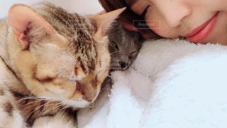 近くに眠っている猫のアップの写真・画像素材[1291439]
