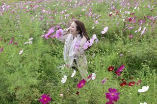 フィールドにピンクの花の写真・画像素材[1585365]
