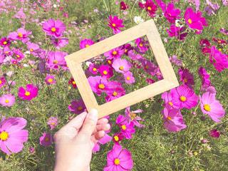 紫色の花を保持している小さな女の子の写真・画像素材[1597557]