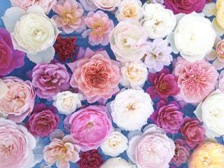 近くの花のアップの写真・画像素材[1792252]