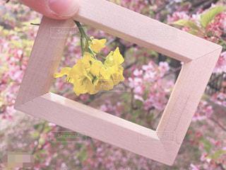 近くに木製ベンチの花のアップの写真・画像素材[1866567]