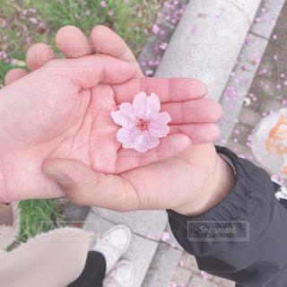 花を持っている手の写真・画像素材[1877973]