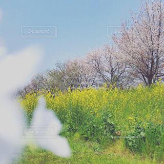 空の写真・画像素材[1988100]