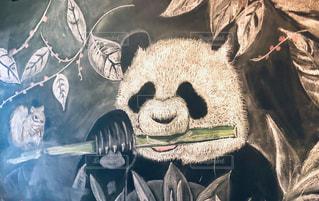 動物,絵,アート,リス,パンダ,黒板,チョーク