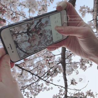 携帯電話を持つ手の写真・画像素材[2283307]