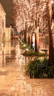 風景,夜,大阪,水面,景色,樹木,イルミネーション,都会,並木,照明,並木道,明るい,グランフロント大阪