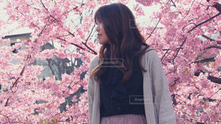 女性,1人,風景,花,桜,木,ピンク,花見,サクラ,樹木,お花見,横顔,人,イベント,さくら