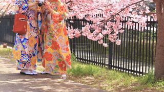 女性,友だち,2人,花,春,桜,木,屋外,ピンク,花見,サクラ,草,お花見,着物,人,イベント,カラー,さくら