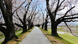 公園の大きな木の写真・画像素材[3062092]