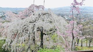 背景に山のある木の写真・画像素材[3062107]