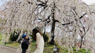 木の隣に立っている男の写真・画像素材[3064144]